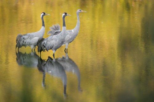 """Vortrag von Naturfotograf zum Abschluss der Sonderausstellung """"Zug der Kraniche"""""""