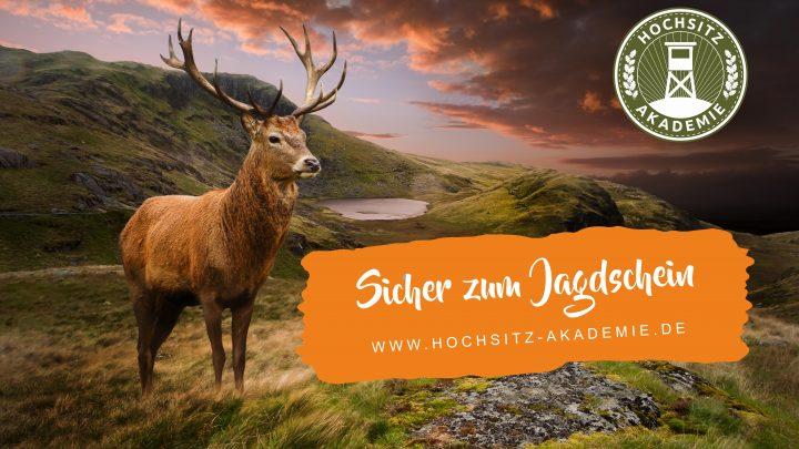 Sicher zum Jagdschein durch ein perfektes Ausbildungssystem – ohne Urlaub, ohne Reisekosten
