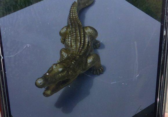 Goldenes Krokodil gestohlen